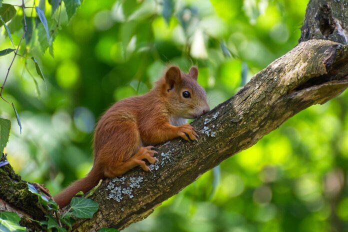 wie heißt das kleinste säugetier der welt